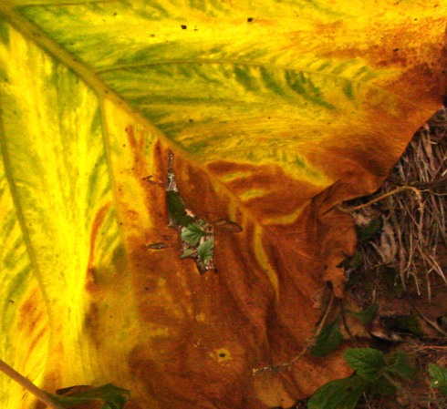 leafandrock